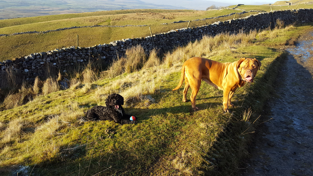 Nidderdale Dog Friendly Pubs